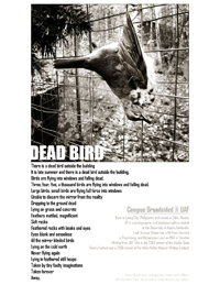 dead_bird2-thumb